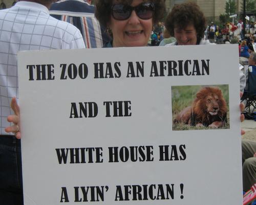 Zoo african lyin african