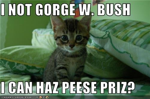 Not bush nobel cat